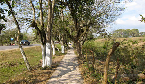 The path to Copan ruins.