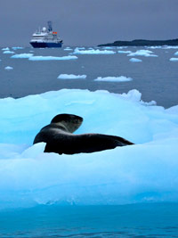 A leopard seal on an iceberg in front of our ship.