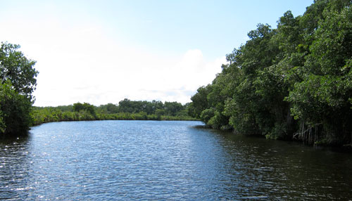 The first river we see in Belize, lined with mangrove trees.