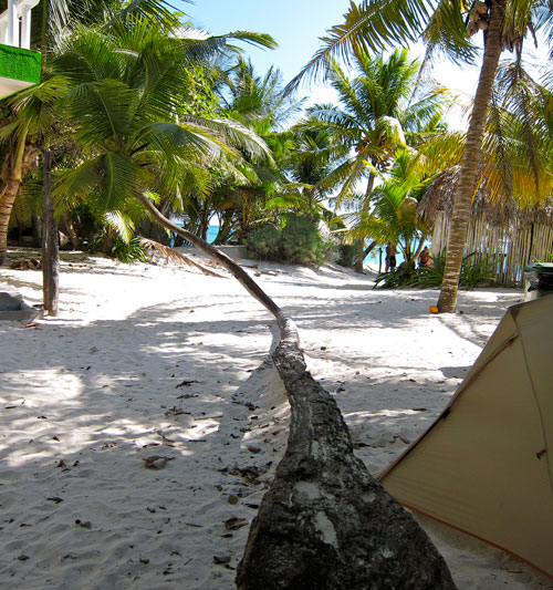 Our campsite in Tulum, next to a very bent palm tree.