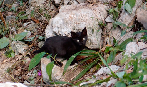 A black kitten at our campsite near Chichen Itza.